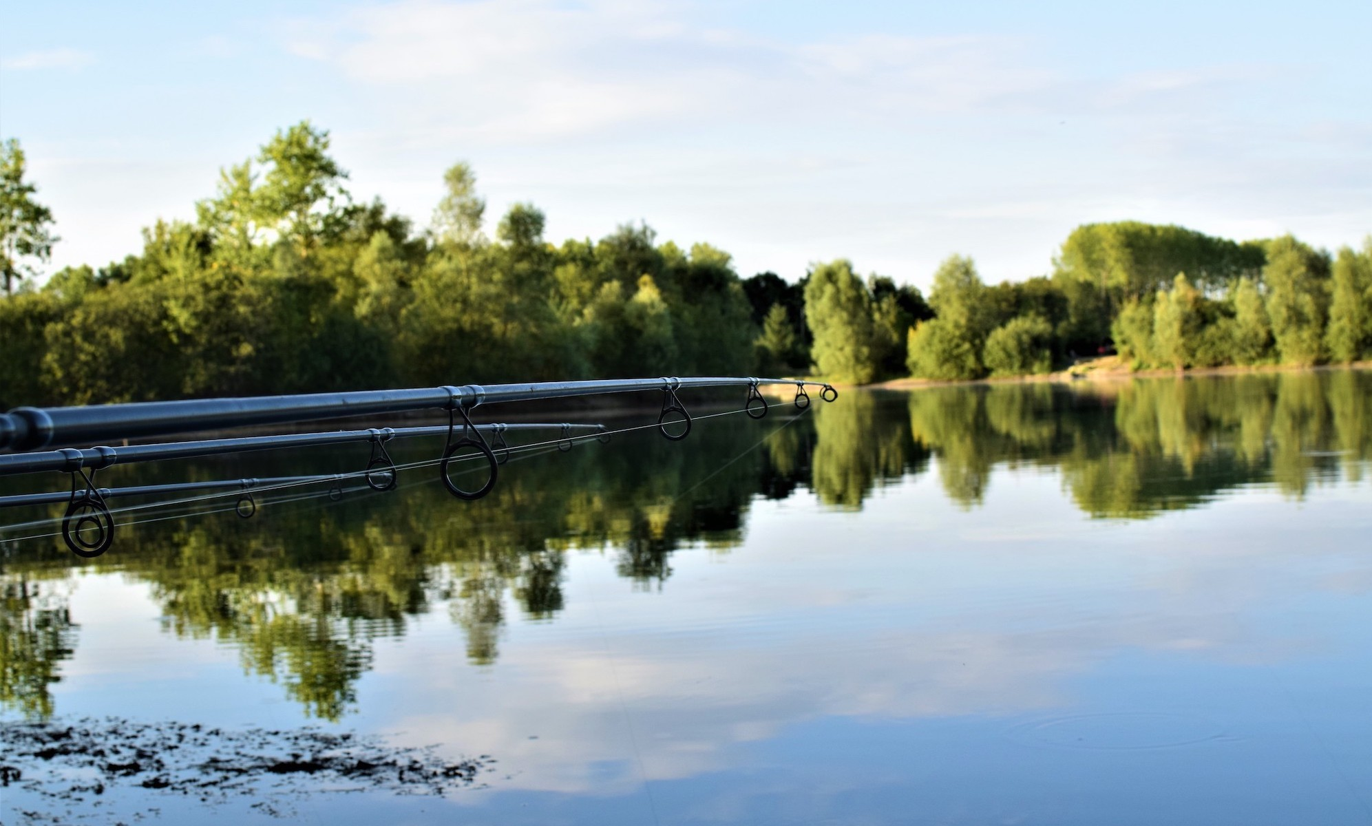 view on the lake with 3 rods